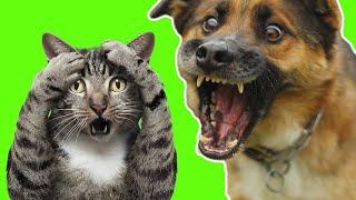 Самые смешные животные Приколы с котами и собаками 2021 9