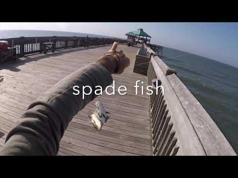 FOLLY BEACH PIER LAST WEEK OF MAY 2019 MIXED BAG OF FISH