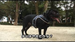 黒パグナイトの埼玉 所沢市 所沢航空記念公園ドッグラン 燃焼系の秋!!