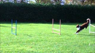 Gymnastics in dog agility (2) Thumbnail