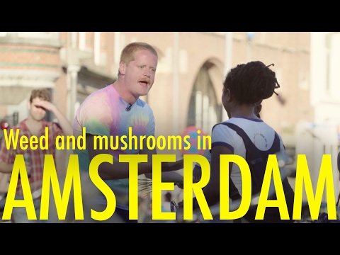 Weed and Mushrooms in Amsterdam - INTERNATIONAL TOURRORIST [
