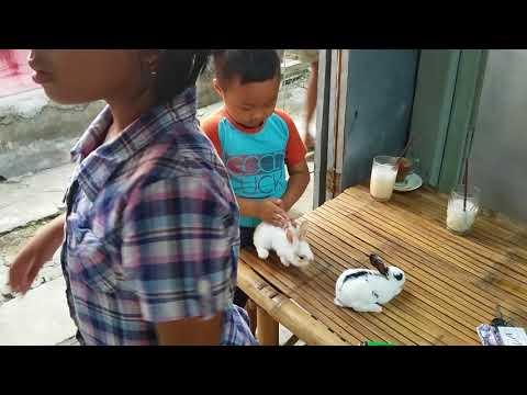 Mbak Dira & Faiq Uang Lebaran Buat Beli Kelinci