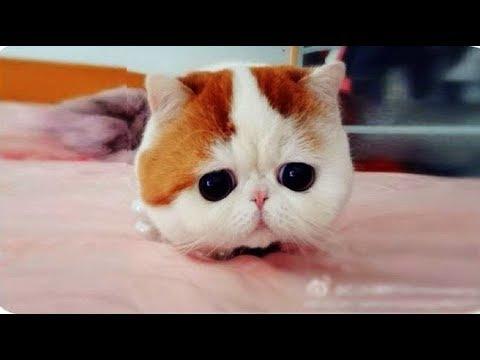 Download 100+  Gambar Kucing Yang Lucu Sekali Terbaik HD