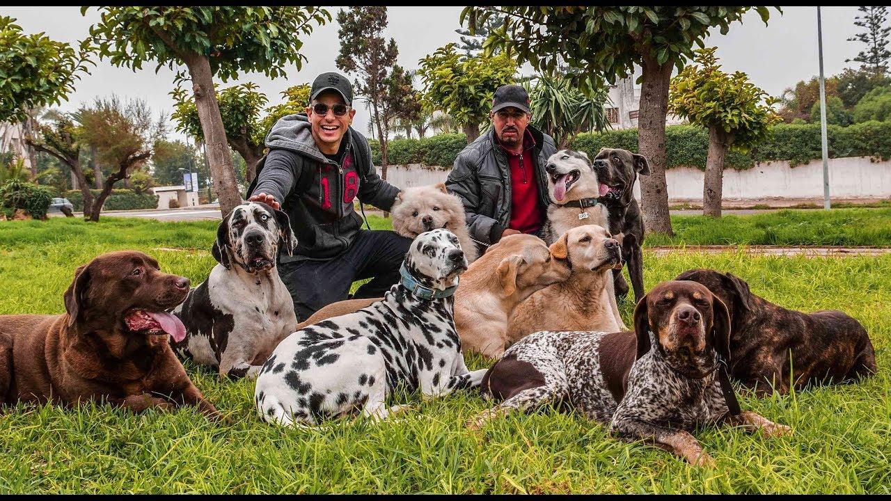 #24FOR24 - VLOG 130 - مدرب الكلاب لمدة يوم - DOGWALKER FOR A DAY