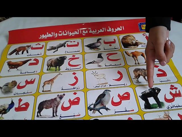 الحروف العربية مع الحيوانات والطيور- تعليم الحروف الهجائية - الحروف الأبجدية -تعليم الحروف الأبجدية
