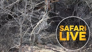Join Us for a New Episode of safariLIVES This Monday!