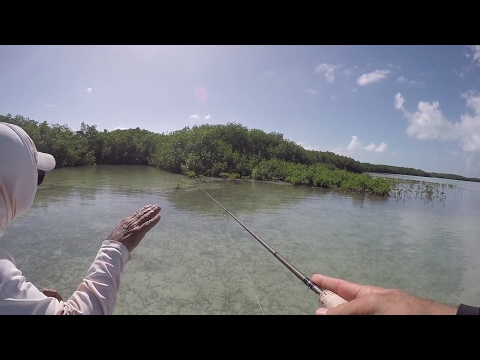 This Place Is A Fishing Paradise | Belize Day 2