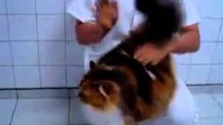 Бесплатные видео про кошек - ну очень терпеливый кот!