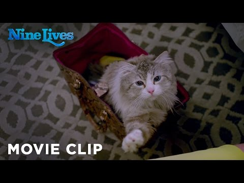 Nine Lives - Who Needs a Litter Box [HD]