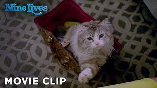Video Nine Lives - Who Needs a Litter Box [HD] download MP3, 3GP, MP4, WEBM, AVI, FLV September 2017