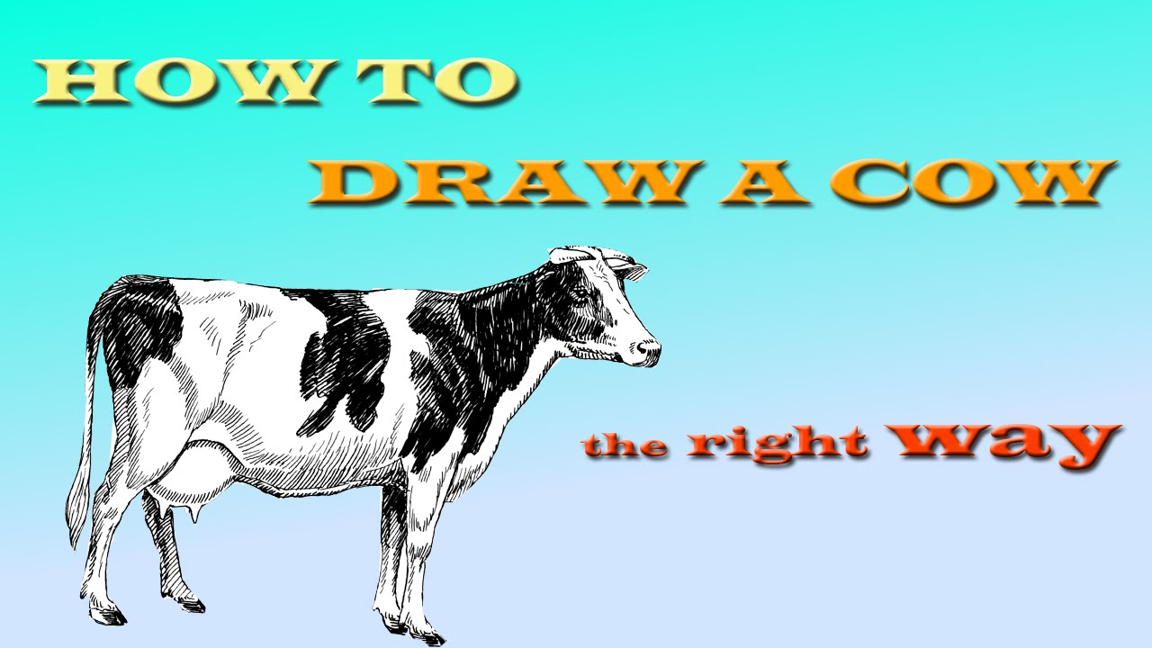 how to draw a realistic cow youtube