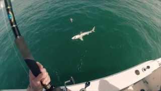 Bull Shark Offshore Atlantic Beach, NC