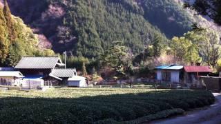 Japan Farmer's Paradise