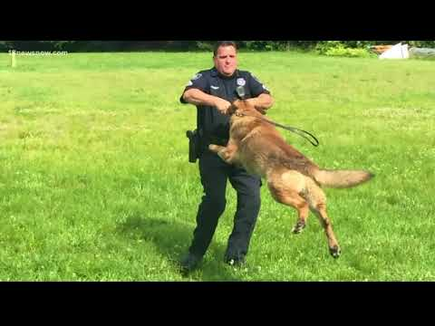 Newport News Police K-9 retires after 11 years