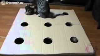 Котята играют в коробке.