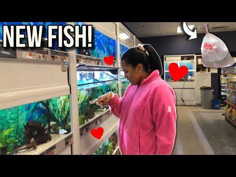 *NEW* FISH FOR 10G AQUARIUM FISH TANK!