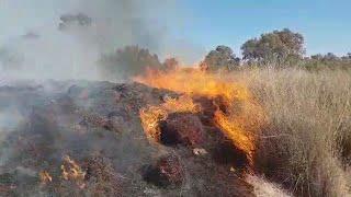 טרור עפיפונים בלון תבערה שריפה שריפות ב נחביר יער בארי מסדר הדר שמחה גולדין