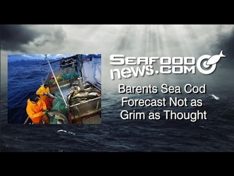 Barents Sea Cod Forecast Not as Grim as Thought