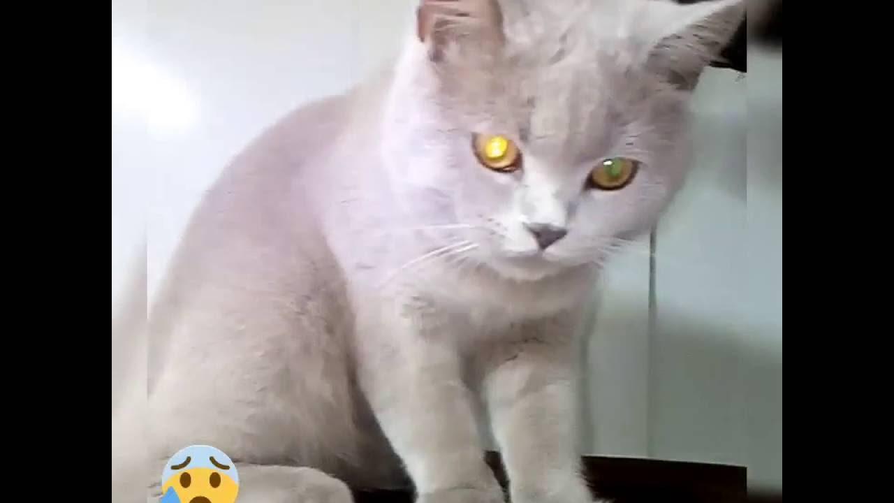 Кот и кошка))) - YouTube