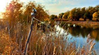 ЗАКИДУШКА ОБЛАВИЛА все удочки ЛОВЛЯ САЗАНА и КАРАСЯ на жмых в октябре Рыбалка в Астрахани