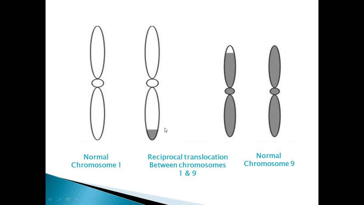 Chromosome Abnormalities Effects Of Reciprocal
