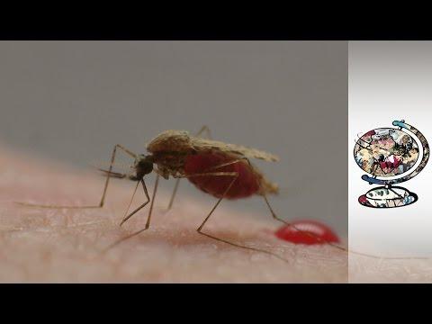 Burkina Faso's Malaria Epidemic