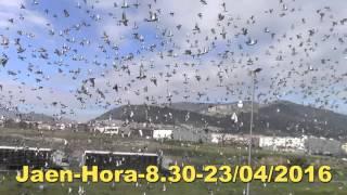 ACD Porto Jaen Hora-8.30-23/04/2016-PORTUGAL