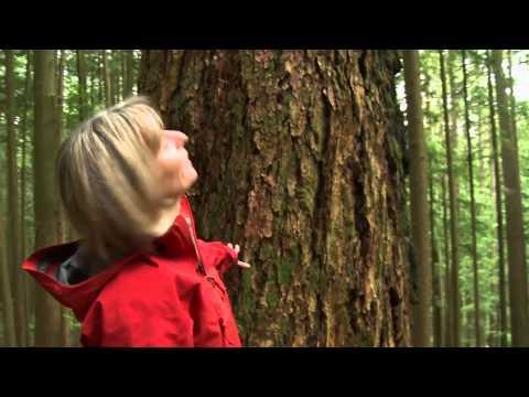 Tree's found to communicate through Fungi [Avatar!]
