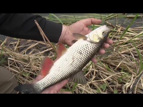 Смотреть видео о рыбалке всерьез