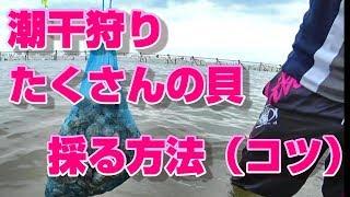 たくさんの貝を採る独自のコツです。 潮干狩りには多い年には5、6回行き...