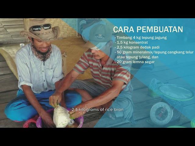 Video Tutorial: Pemanfaatan Lemna untuk Ransum Babi