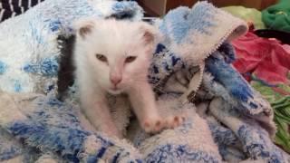 Отдам свеженайденного котенка в Воронеже