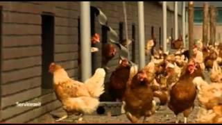 Wie viel Bio ist im Ei ? Unterschied Freilandhaltung Bio Eier aus den Niederlanden