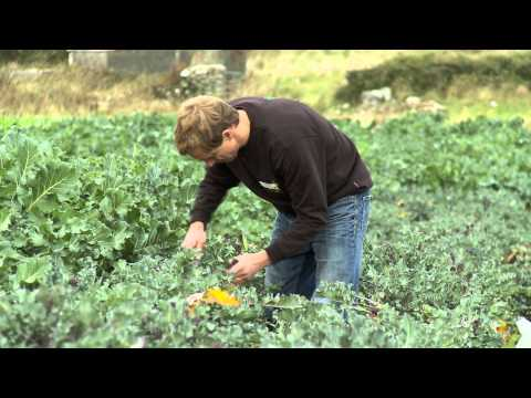 Organic food: The reality at Green Earth Organics