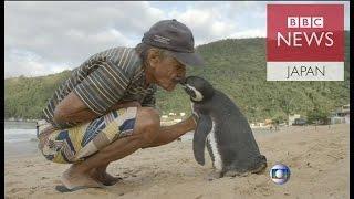 数千キロを旅して命の恩人のもとに帰ってくるペンギンが話題になってい...