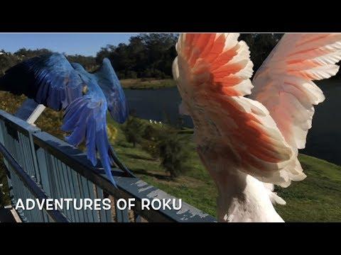 Roku & Pabu Surf the Winds