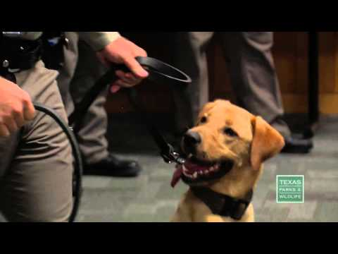 Texas Game Warden K-9 Graduation -  Texas Parks and Wildlife [Official]