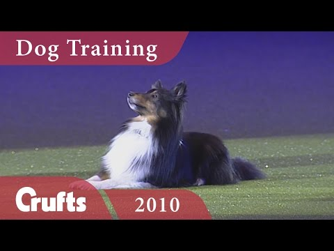 How to Train Your Dog with Mary Ray | Crufts Dog Show