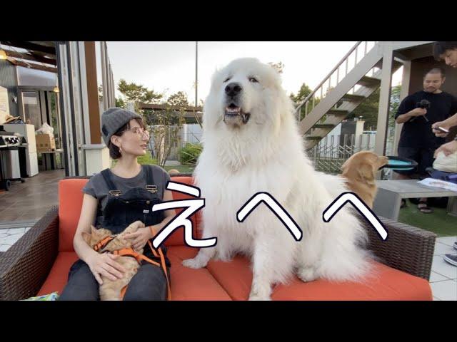 ドッグプールで愛犬たちと過ごす幸せなひととき