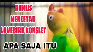 CARA MENCETAK LOVEBIRD KONSLET - TIPS & TRIK ILMU KICAU