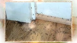 How Much Does It Cost To Treat Termites
