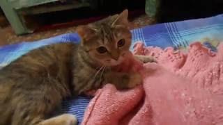 Кошка Ромашка мутузит кофту!