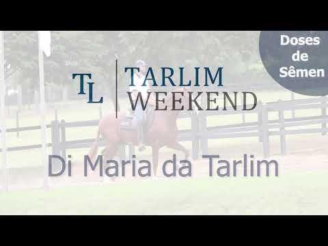 Doses de Sêmen - Di Maria da Tarlim (6º Leilão Tarlim)