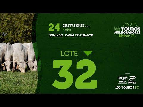 LOTE 32 - LEILÃO VIRTUAL DE TOUROS MELHORADORES  - NELORE OL - PO 202
