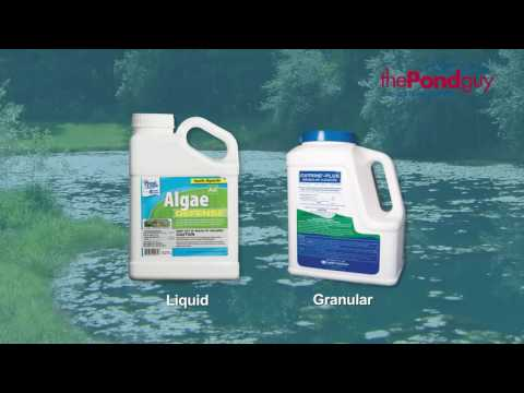 Pond & Lake Algae Control