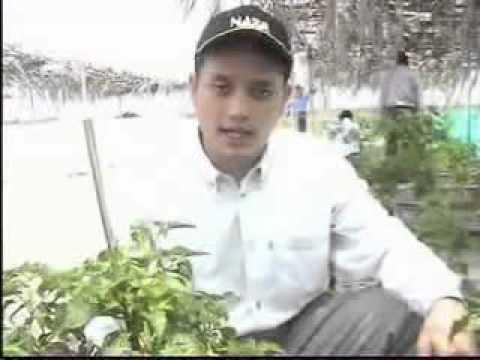 Pertanian Lahan Pasir, Kontak :0852-2858-7247