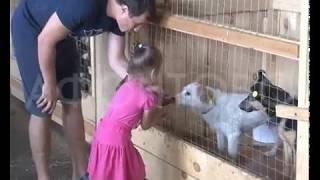 В Красноярске появился приют для животных, предлагающий гостям необычные услуги