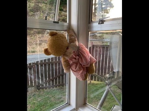 Covid-19 Lockdown: Look Out For Bears In Windows As You Walk