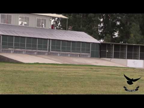 Million Dollar Pigeon Race Final 2017