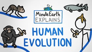 MinuteEarth Explains: Human Evolution